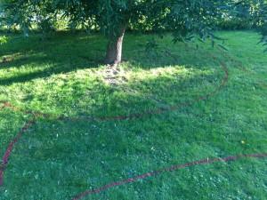 Pilträd och träsmatta