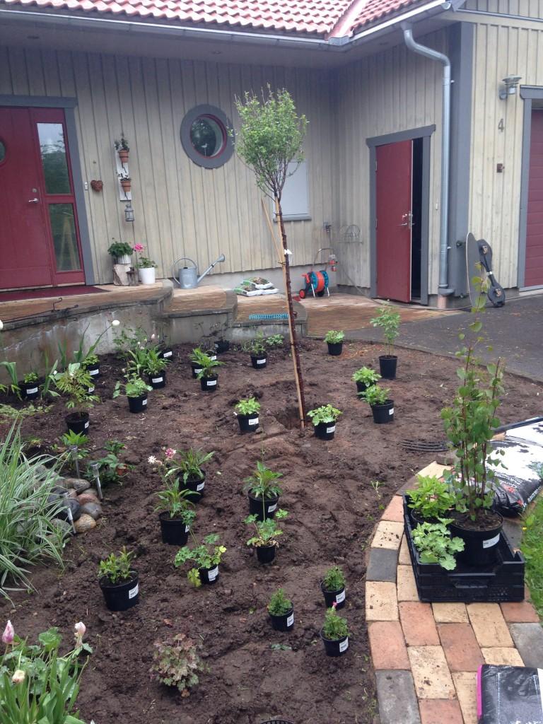 Utplantering av växter på framsidan