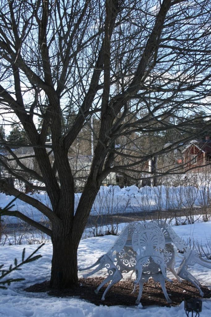 vinter-bollpil